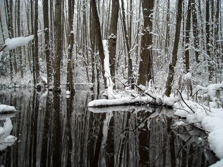 Pond in winter 2 Фото со стока
