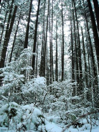 Snow falling in a forest 2