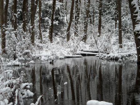 Pond in winter Фото со стока