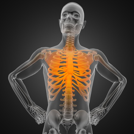 human radiography scan photo
