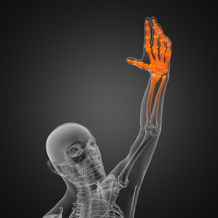 human radiography scan photo