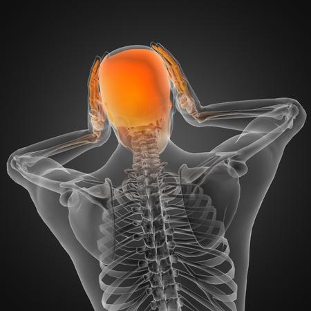 human radiography scan Stock Photo - 12265597