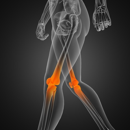 human radiography scan Stock Photo - 12265601