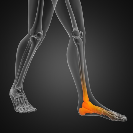 foot doctor: human radiography scan