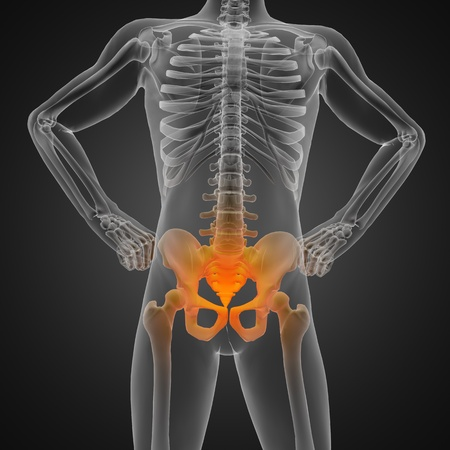 roentgen: human radiography scan