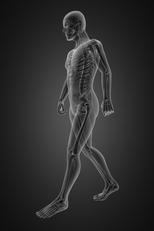walking man radiography made in 3D Stock Photo - 12265507