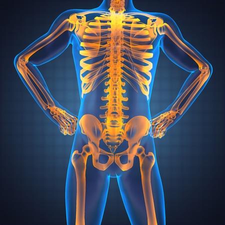 radiografia scansione umano fatto in 3D Archivio Fotografico