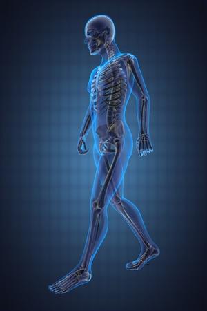 squelette: radiographie homme qui marche fait en 3D Banque d'images