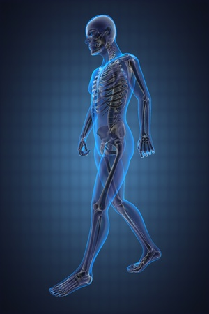 skeleton: walking man radiography made in 3D Stock Photo