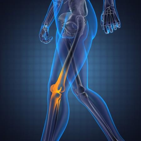 de rodillas: La radiograf�a de exploraci�n humana hecha en 3D Foto de archivo