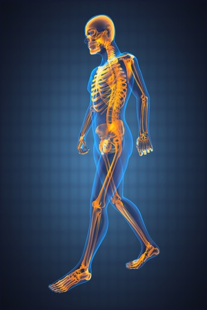 body joints: walking man radiography made in 3D Stock Photo