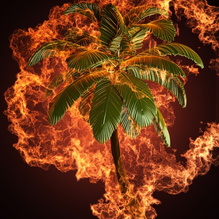 Palm in fire made in 3D photo