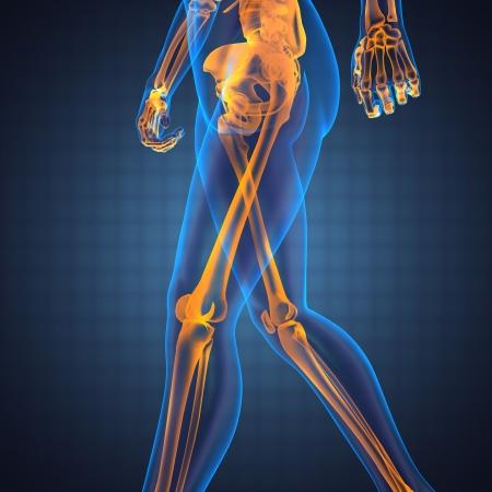 La radiografía de exploración humana hecha en 3D Foto de archivo