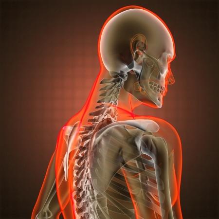 partes del cuerpo humano: La radiograf�a de exploraci�n humana hecha en 3D Foto de archivo