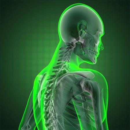 menselijk radiografie scan gemaakt in 3D