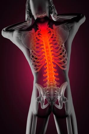 backbone: human radiography scan made in 3D