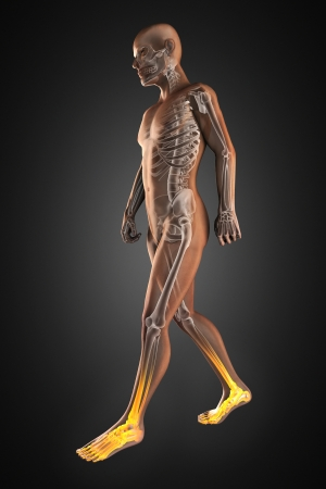 adult bones: walking man radiography made in 3D Stock Photo