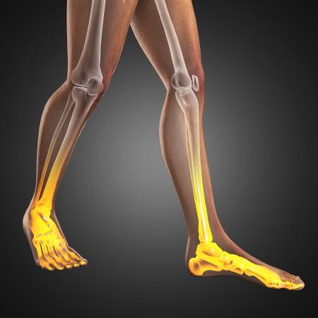 radiografia scansione umana fatta in 3D