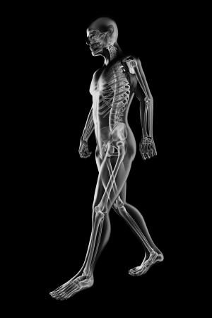 partes del cuerpo humano: hombre que camina la radiografía hecha en 3D