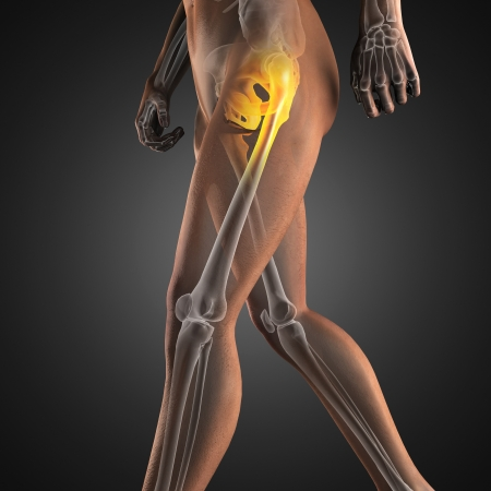 human body parts: human radiography scan made in 3D