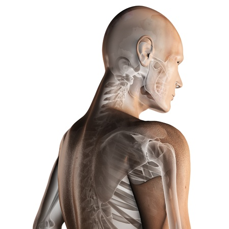 body joints: human radiography scan made in 3D