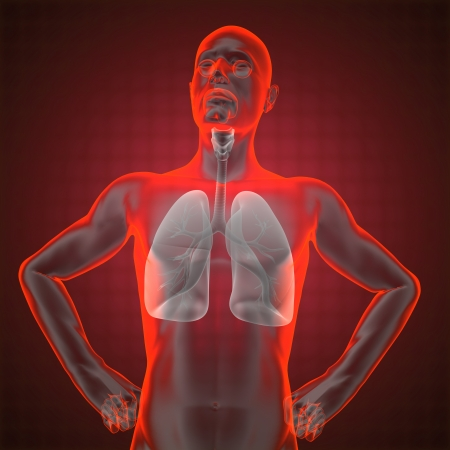 human chest radiography made in 3D Stock Photo - 16835261