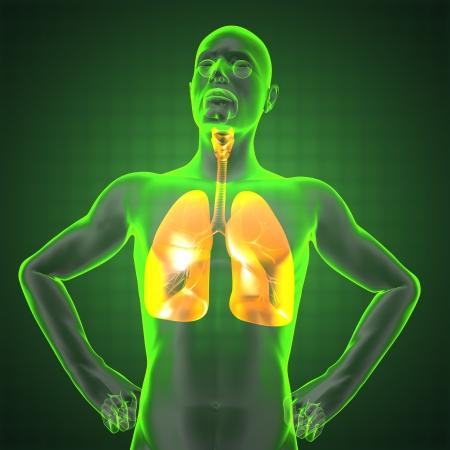 cuerpo hombre: radiograf�a de t�rax humano en 3D