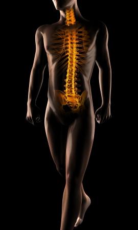 human radiography scan on black photo