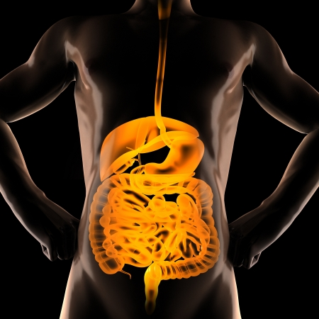 entrails: human entrails radiography scan on black