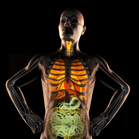 human entrails radiography scan on black Stock Photo - 18352895