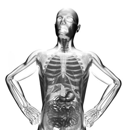 human entrails radiography scan on white Stock Photo - 18492382