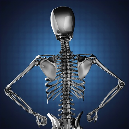 human skeleton model on blue background photo
