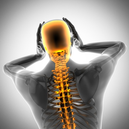 human bones radiography scan. x-ray  image photo