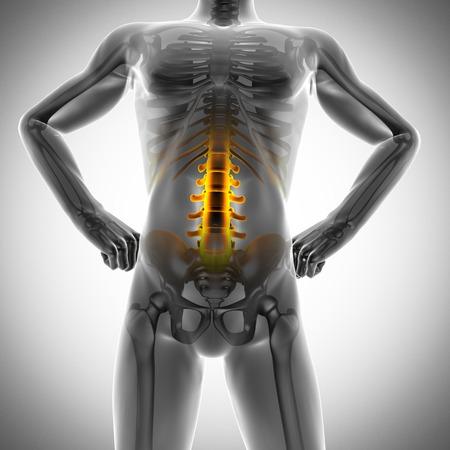 human bones: human bones radiography scan. x-ray  image