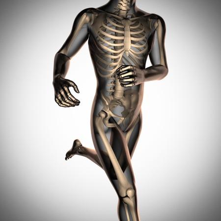 human skeleton: exploración radiografía humana con huesos Foto de archivo