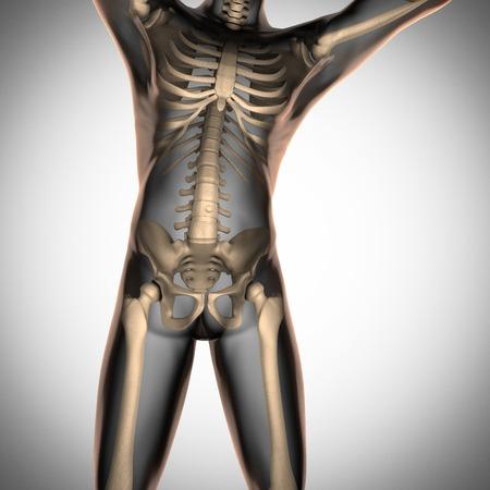 radiography: human radiography scan  with bones