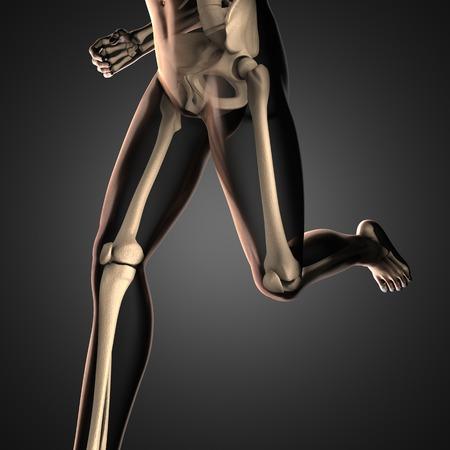 roentgen: human radiography scan  with bones