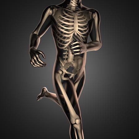 corpo umano: scan radiografia umana con le ossa