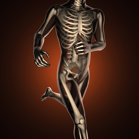skeleton anatomy: human radiography scan  with bones