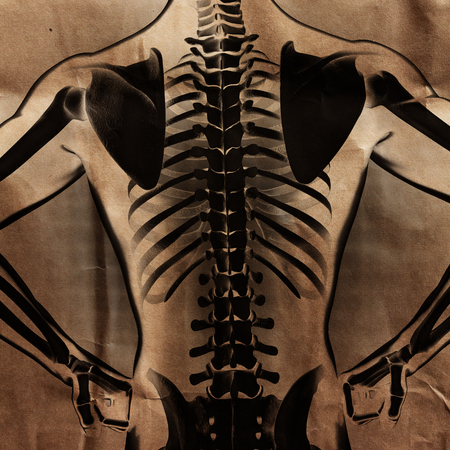 radiography: human radiography scan  with bones painted