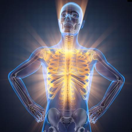 back back: human bones radiography scan image