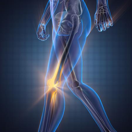 partes del cuerpo humano: huesos humanos imagen escaneada radiografía