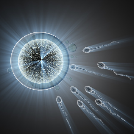 sex cell: sperm and egg cell. microscopic image