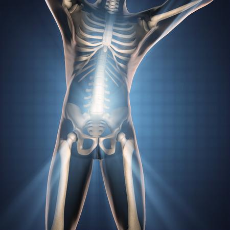 radiography: human bones radiography scan image