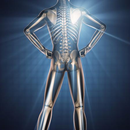 x ray skeleton: human bones radiography scan image
