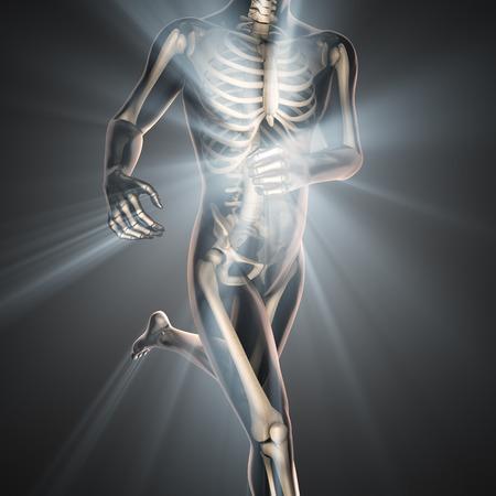 back bone: human bones radiography scan image