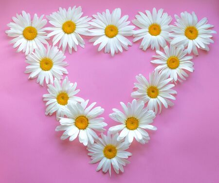 Large daisies laid out in the form of a triangle on a pink background.