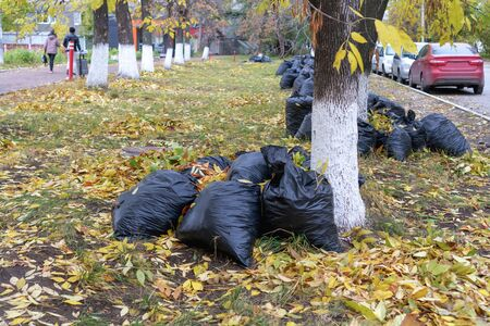 Bunch of withered leaves lying in black bin bags. Seasonal cleaning of city streets from fallen leaves of trees. Autumn season, foliage. Russia, Tatarstan, 3 October, 2019