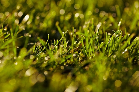 Morning dew on a grass  A lawn is in a park photo