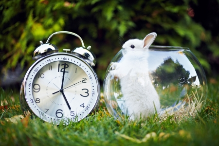 Motives for Alice in Wonderland  Rabbit sitting on the grass in the aquarium  Next big shiny watch